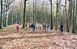 Parco nazionale foreste casentinesi